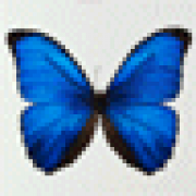 mothy54
