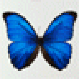 butterfly.gif