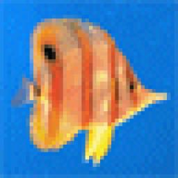 fish.gif