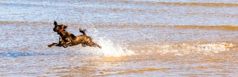 Flying dog !!!!